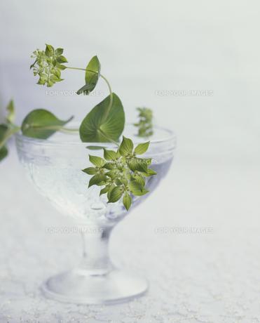 グラスにグリーンの素材 [FYI01143986]