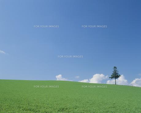 高原の木と青空の素材 [FYI01144122]