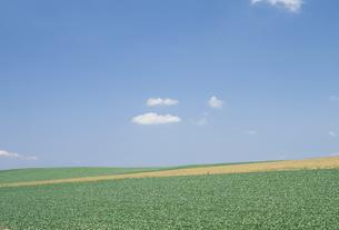 畑と青空の素材 [FYI01144123]