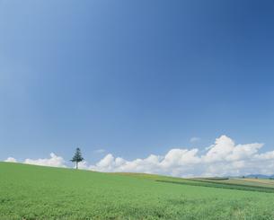 大地と青空の素材 [FYI01144132]