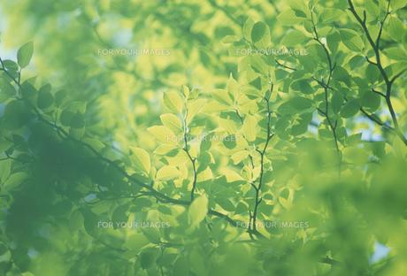 新緑の素材 [FYI01144170]