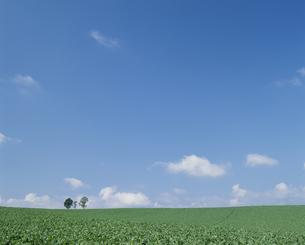 ジャガイモ畑の素材 [FYI01144187]