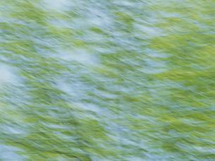 流れる新緑の素材 [FYI01144192]