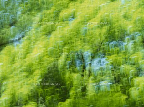新緑の素材 [FYI01144194]