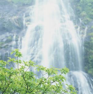 滝の素材 [FYI01144199]