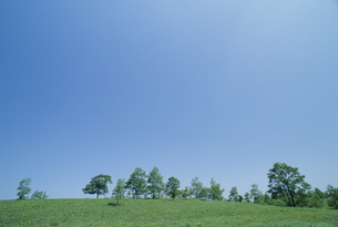高原の木立と青空の素材 [FYI01144209]
