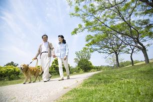 公園で犬の散歩をするシニア夫婦の素材 [FYI01144251]