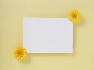 花カードの素材 [FYI01144478]
