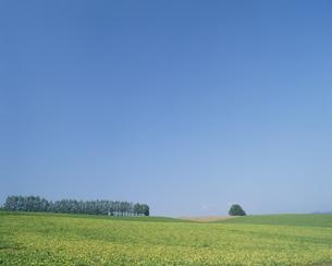 高原と青空の素材 [FYI01144583]