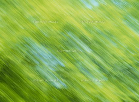 流れる新緑の素材 [FYI01144621]