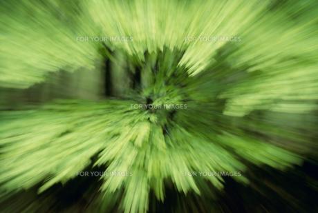 流れる新緑の素材 [FYI01144639]