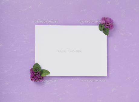 花カードの素材 [FYI01144646]