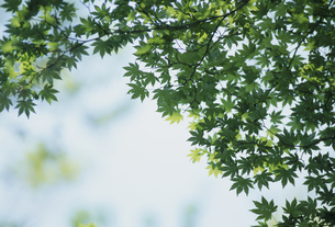 新緑の素材 [FYI01144714]