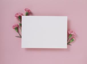花カードの素材 [FYI01144715]