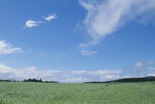 高原と青空の素材 [FYI01144783]