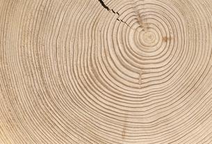 木目の素材 [FYI01145094]