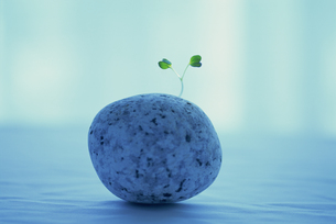 石と新芽の素材 [FYI01145104]