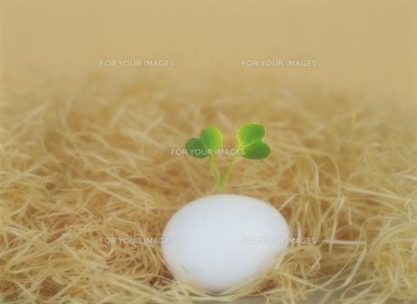 卵と新芽の素材 [FYI01145108]