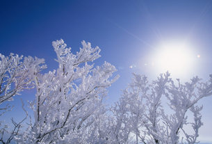 霧氷と太陽の素材 [FYI01145682]