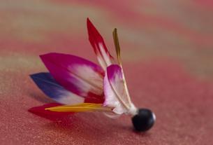 羽根つきの羽根の素材 [FYI01145702]