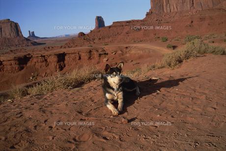 犬の素材 [FYI01145714]