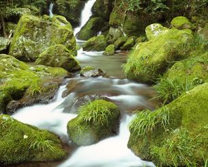 清水瀑園の素材 [FYI01145982]