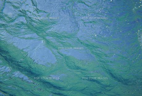 水中から見た水面の素材 [FYI01146005]