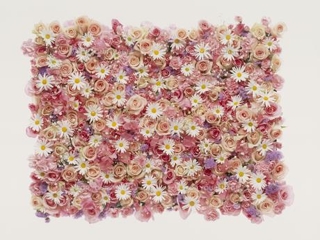 敷き詰めたピンク系の花々の素材 [FYI01146017]