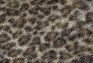 豹柄の素材 [FYI01146029]