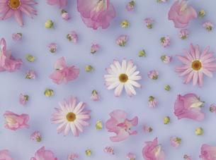 散りばめた花の素材 [FYI01146144]