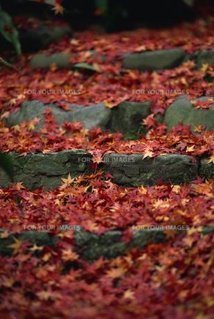 紅葉の石段の素材 [FYI01146149]