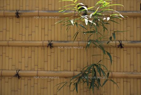 竹の柵の素材 [FYI01146259]