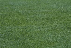 芝生の素材 [FYI01146283]