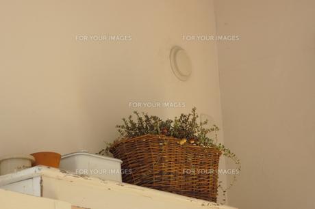 棚の上の植物のバスケットの素材 [FYI01146438]