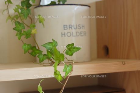 木製の棚の上の植物(アイビー)の素材 [FYI01146474]