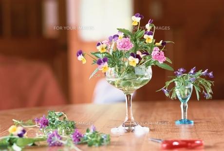 花の素材 [FYI01146670]