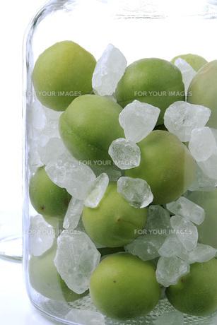 ビンの中の青梅と氷砂糖の素材 [FYI01148458]