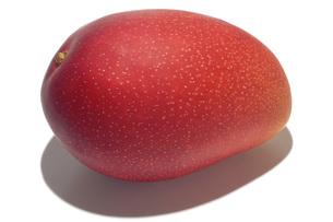 アップルマンゴーの素材 [FYI01148803]