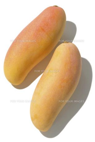 タイマンゴーの素材 [FYI01148883]