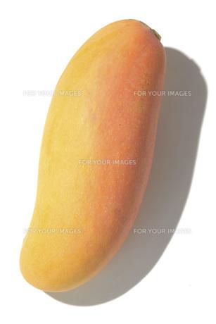タイマンゴーの素材 [FYI01148918]