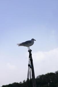 海鳥の素材 [FYI01149725]