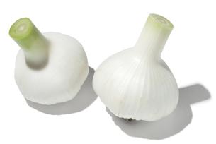 新大蒜の素材 [FYI01151288]
