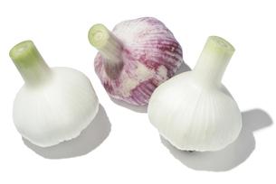 新大蒜の素材 [FYI01151303]