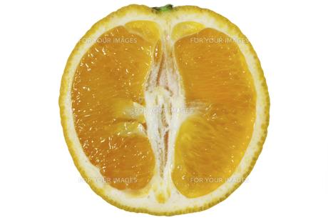 バレンシアオレンジ断面の素材 [FYI01151330]