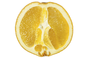 ネーブルオレンジ断面の素材 [FYI01151341]