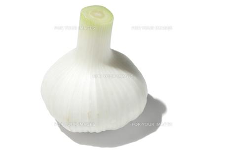 新大蒜の素材 [FYI01151377]
