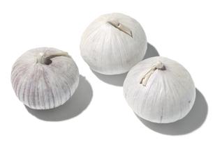 一片種大蒜の素材 [FYI01151390]