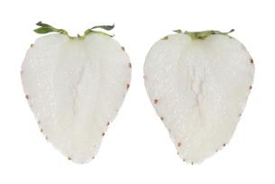 白苺断面の素材 [FYI01151414]