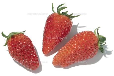 章姫苺の素材 [FYI01151468]
