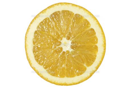 ネーブルオレンジ断面の素材 [FYI01151469]